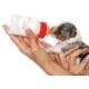 Royal Canin Puppy Protech ÚJ tejpótló tápszer